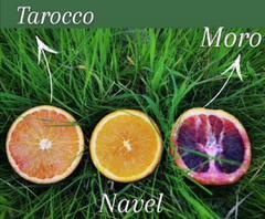orange_moro_navel_tarocoo_02
