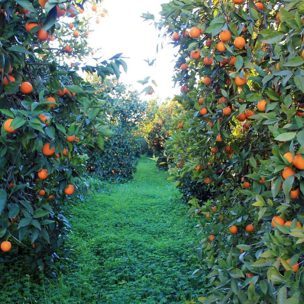 biovalle_mandarine