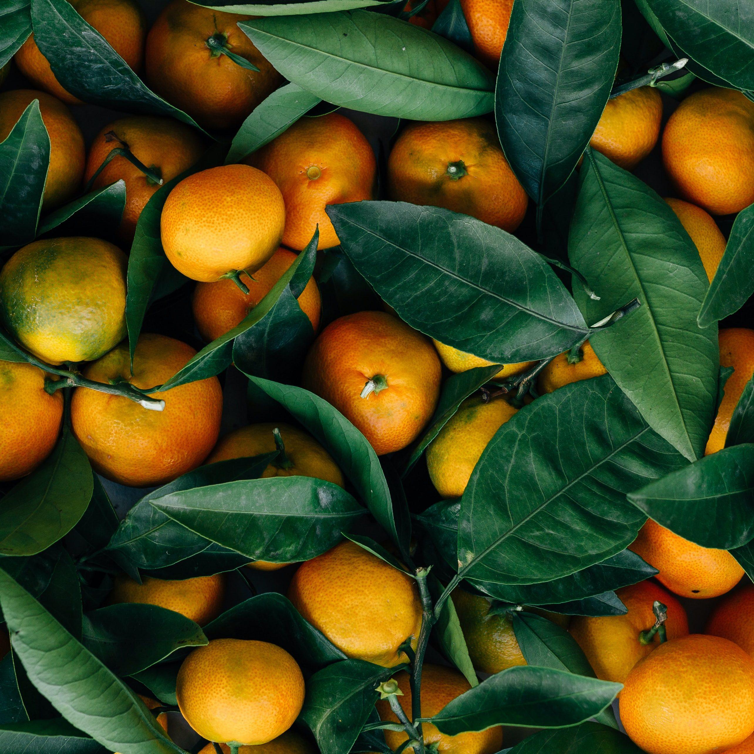 clementine_02
